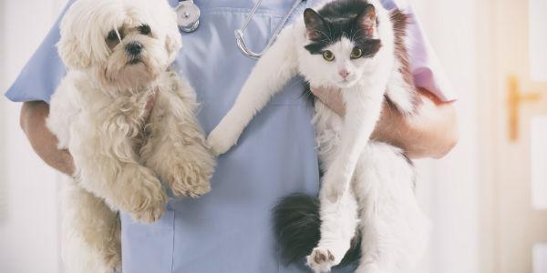 O que um veterinário faz?