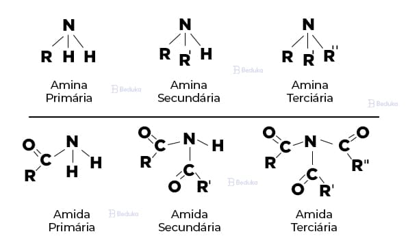 Tipos de Amida e Amina funções nitrogenadas