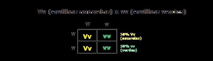 Lei de Mendel - Ervilhas Amarelas