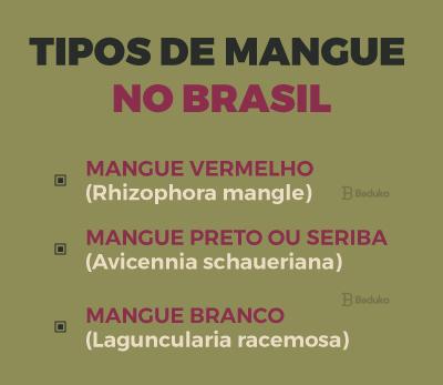 tipos de mangue no Brasil