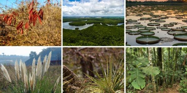 Qual a importância dos biomas brasileiros