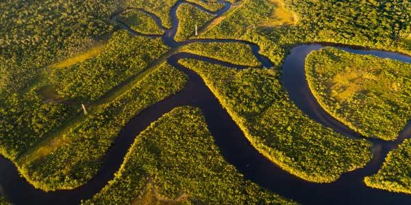 Principais características da Floresta Amazônica