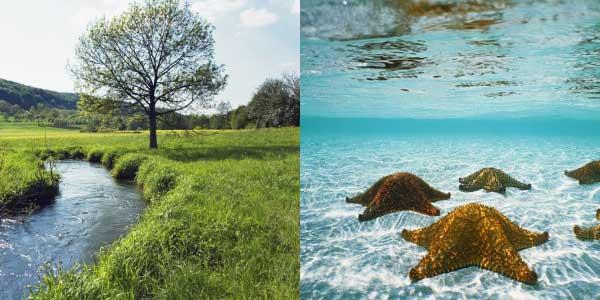 Biomas Aquático: rio passando perto de uma árvore e estrelas do mar em água cristalina