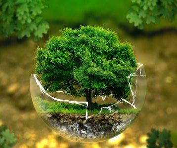 ecologia e meio ambiente