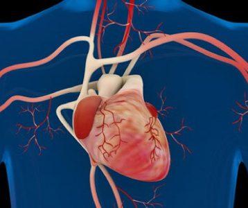 Exercícios sobre Sistema Cardiovascular