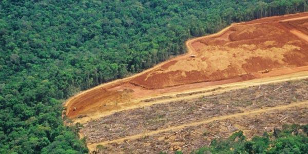 Exercícios sobre Aquecimento Global desmatamento