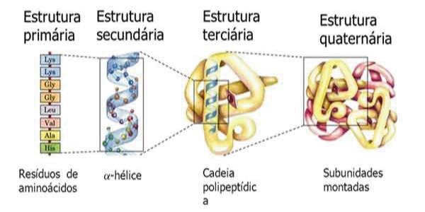 estrutura da proteina