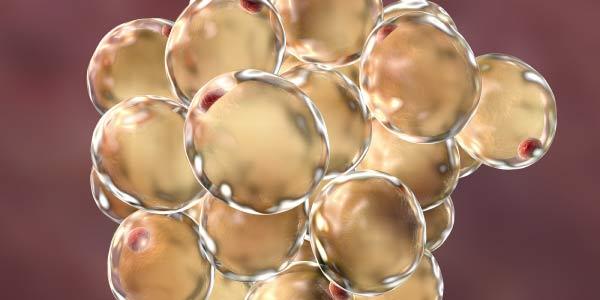 lipidios bioquimica