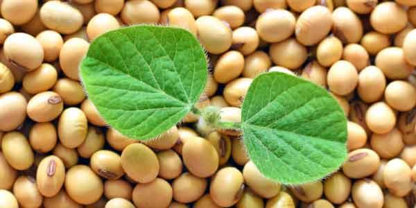 agricultura de soja no brasil