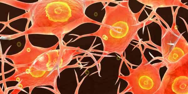 tecido nervoso histologia