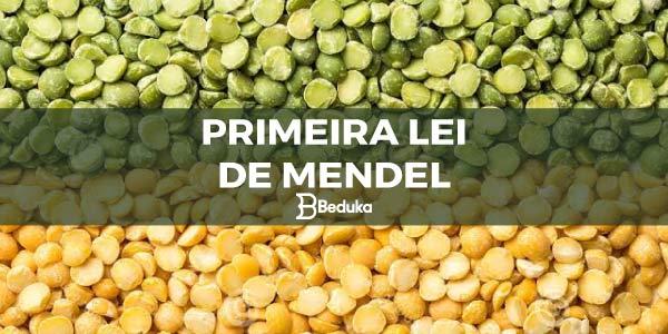 APRENDA-QUAL-A-PRIMEIRA-LEI-DE-MENDEL
