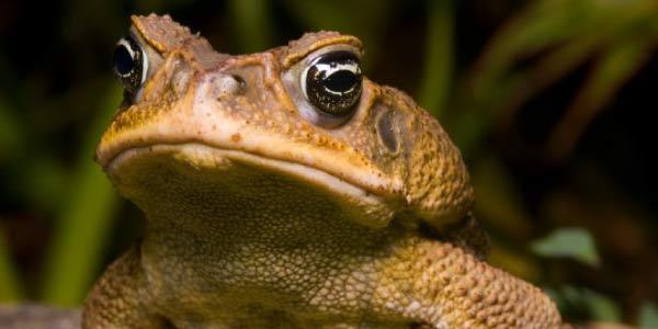 anfibios reino animal