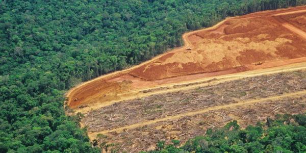 desmatamentos são mais comuns como problemas ambientais no Brasil