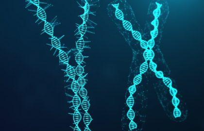 O que é Material Genético