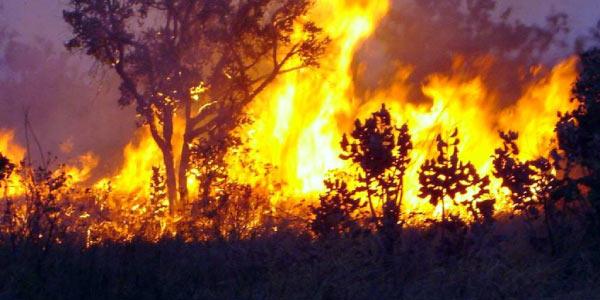 queimadas em florestas