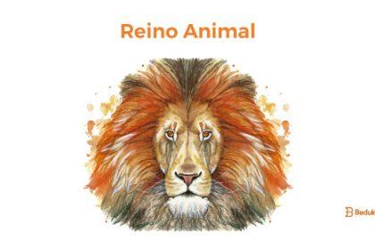 Resumo do Reino Animal