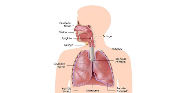Exercícios sobre Sistema Respiratório com representação do pulmão e outros órgãos