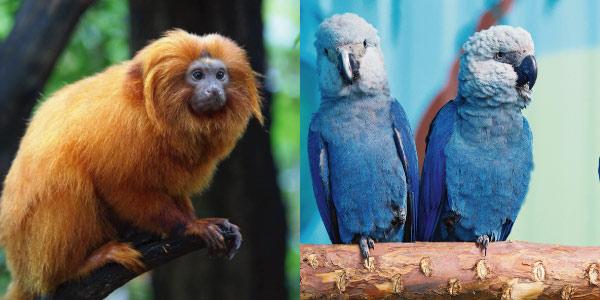 animais em extinção - Reino Animal