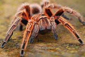 aranhas- Reino Animal