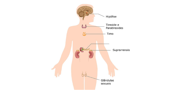 sistema-endócrino do corpo humano