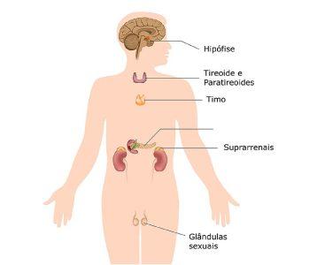 Resumo do Sistema Endócrino