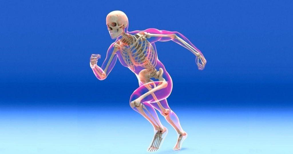 sistema-esqueletico do corpo humano