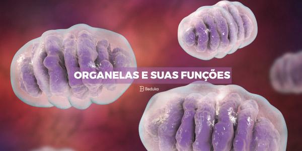 Organelas e suas Funções