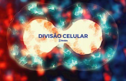 O que é Divisão Celular