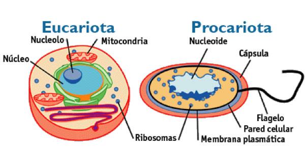eucarionte-e-procarionte