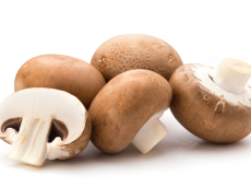 Champignon - Exercícios sobre Fungos