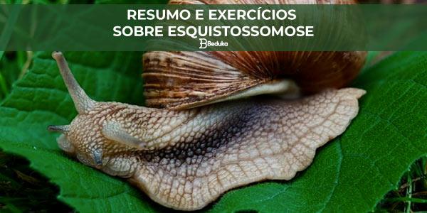 Exercícios sobre Esquistossomose