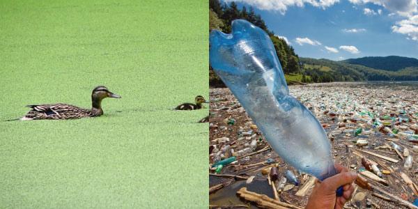 Exercícios sobre Cadeia Alimentar- problemas ambientais