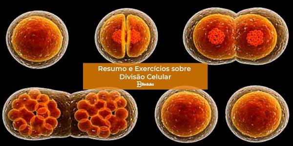 Exercícios sobre Divisão Celular