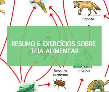 Exercícios sobre Teia Alimentar