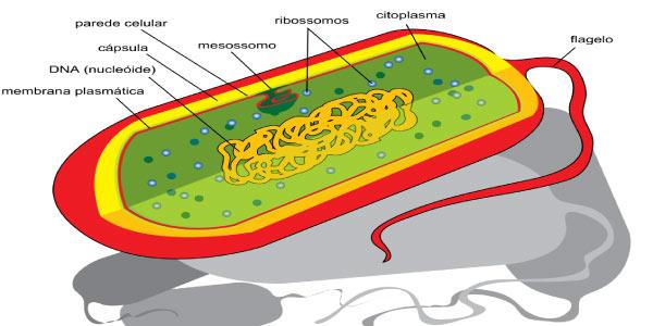 Exercícios de Citologia - célula procarionte