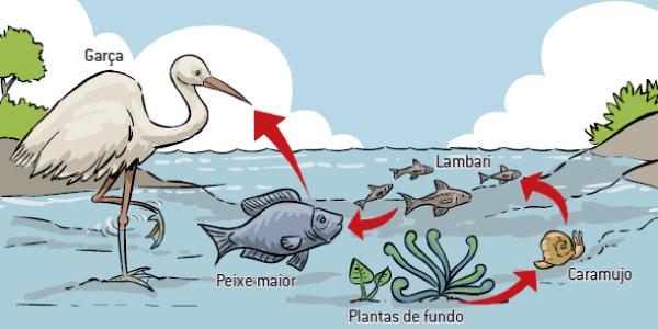 exemplo do que é cadeia alimentar aquática