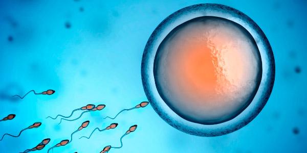 gametas desenvolvidos pelo processo de meiose