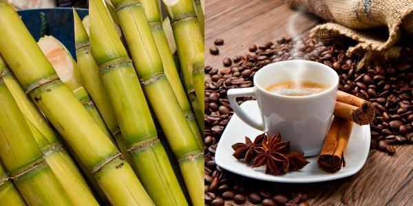 cana de açúcar e café - agropecuária brasileira