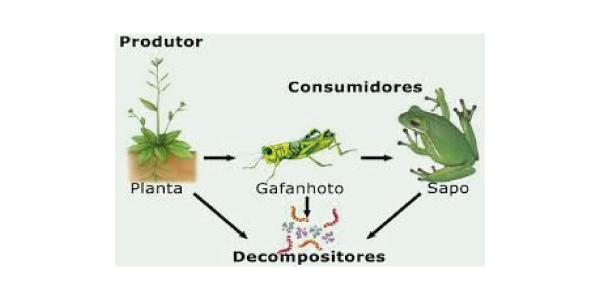 níveis tróficos de uma cadeia alimentar com decompositores