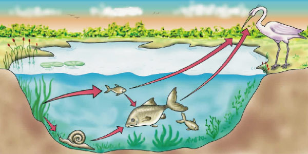 exemplo do ecossistema e sistema-aquático