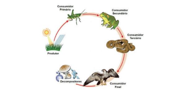 exemplo do que é cadeia alimentar terrestre