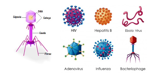 tipos de vírus -Exercícios sobre Vírus