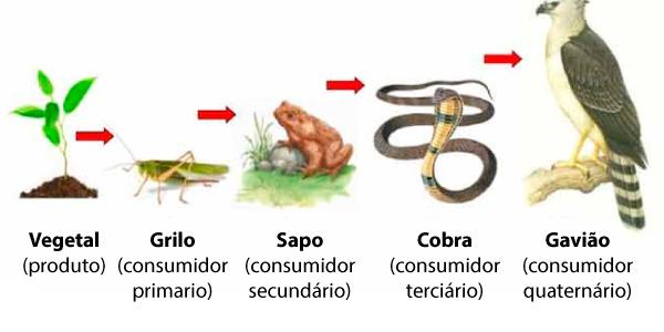 exemplo de cadeia alimentar unidirecional