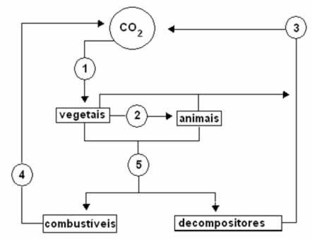 Exercícios-sobre-Ciclo-do-Carbono-VUNESP