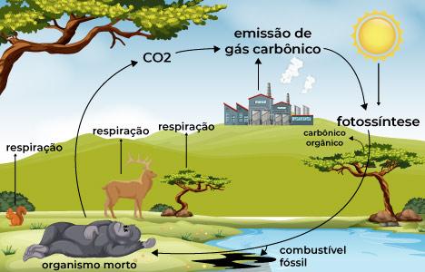 como é realizada o ciclo do carbono