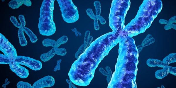 cromossomos na mitose