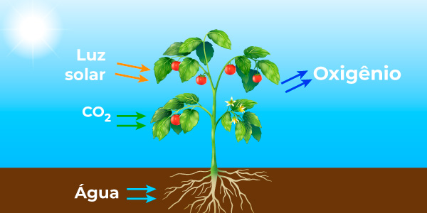 Processo da fotossíntese