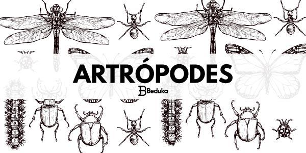 O que são artrópodes