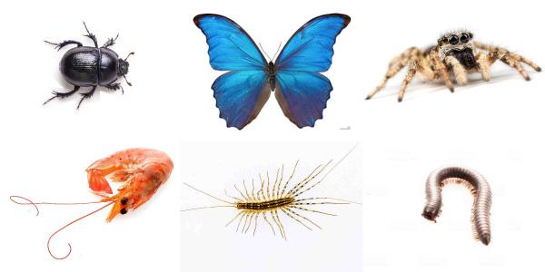 Alguns exemplos de animais que são classificados como artrópodes