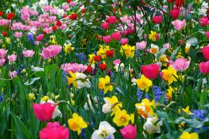 As flores possuem órgãos que servem de sustentação